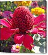 Red Cone Flower Canvas Print