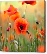 Red Corn Poppy Flowers 06 Canvas Print