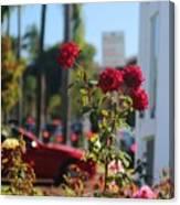 Red Coronado Roses Canvas Print