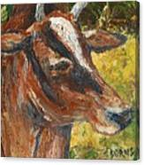 Red Cow Canvas Print