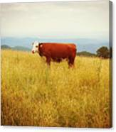 Red Cow On The Blue Ridge Canvas Print