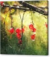 Red Currants Canvas Print