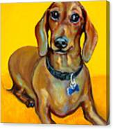 Red Dachshund - Tigger Smiles Canvas Print