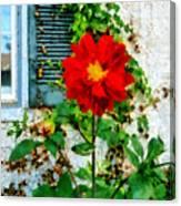 Red Dahlia By Window Canvas Print