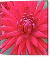 Red Dahlia Delight Canvas Print