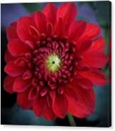 Red Dahlia Square Canvas Print