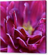 Red Dahlia Canvas Print