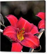 Red Day Lilies Canvas Print