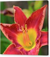 Red Daylily Canvas Print