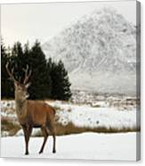 Red Deer Stag And The Buachaille Etive Mor In Winter Canvas Print