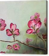 Red Dogwood - Cherokee - Springtime Canvas Print