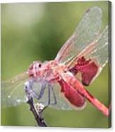 Red Dragonfly 5 Canvas Print