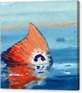 Red Drum Tailing Canvas Print