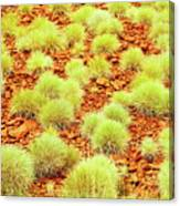 Red Earth And Spinifex 2am-111716 Canvas Print