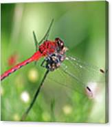Red Elf Canvas Print