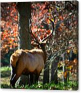 Red Elk Canvas Print