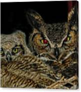 Red Eyed Mama And Baby Horned Owls Canvas Print