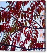 Red Fall Colors Canvas Print