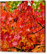 Red Fall Leaves Canvas Print