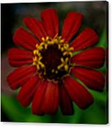 Red Flower 8 Canvas Print