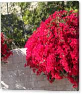 Red Flower Bushes Canvas Print