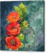Red Flowering Prickly Pear Cactus Canvas Print