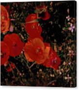 Red Flowers 6 Canvas Print