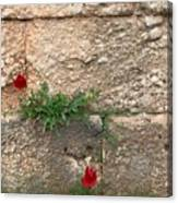 Red Flowers In Ruins Canvas Print