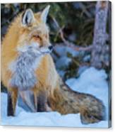 Red Fox At Dawn In Winter Canvas Print