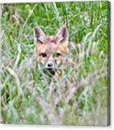 Red Fox Baby Hiding Canvas Print