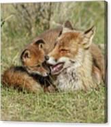 Red Fox Cub Love Canvas Print