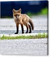Red Fox Kit On Road Canvas Print