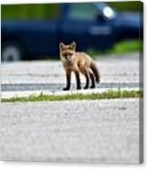 Red Fox Kit Standing On Old Road Canvas Print