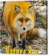 Red Fox Nature Boy Canvas Print