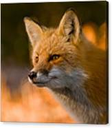 Red Fox Pictures 118 Canvas Print