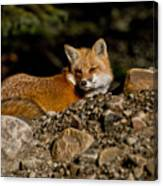 Red Fox Pictures 126 Canvas Print