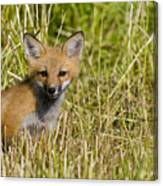 Red Fox Pictures 19 Canvas Print
