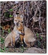 Red Fox Pictures 65 Canvas Print