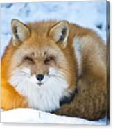 Red Fox Pictures 98 Canvas Print