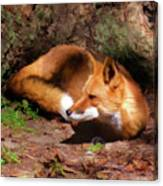 Red Fox Resting Square Canvas Print