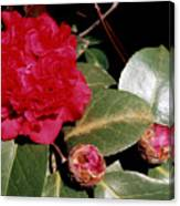 Red Frilly Camillia Canvas Print