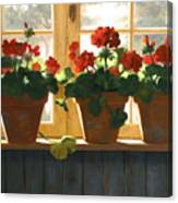 Red Geraniums Basking Canvas Print