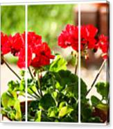 Red Geraniums Triptych Canvas Print