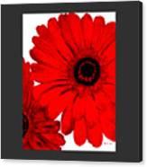 Red Gerber Border     Digital Art  Canvas Print