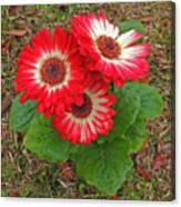 Red Gerbera Daisies Canvas Print