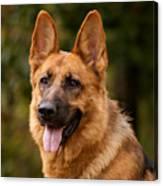 Red German Shepherd Dog Canvas Print