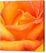 Red Gold Rose Canvas Print