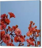 Red Gum Blossoms Australian Flowers Oil Painting Canvas Print