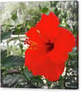 Red Gumamela  Canvas Print