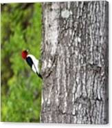 Red Head Bird Canvas Print